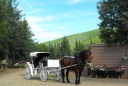 white carriage and horse